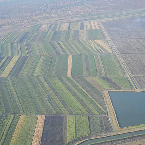 Chisumbanje Irrigation Scheme