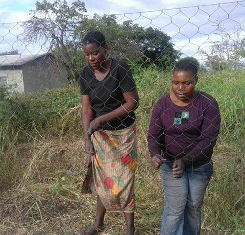 Fencing Project CSR Green Fuel