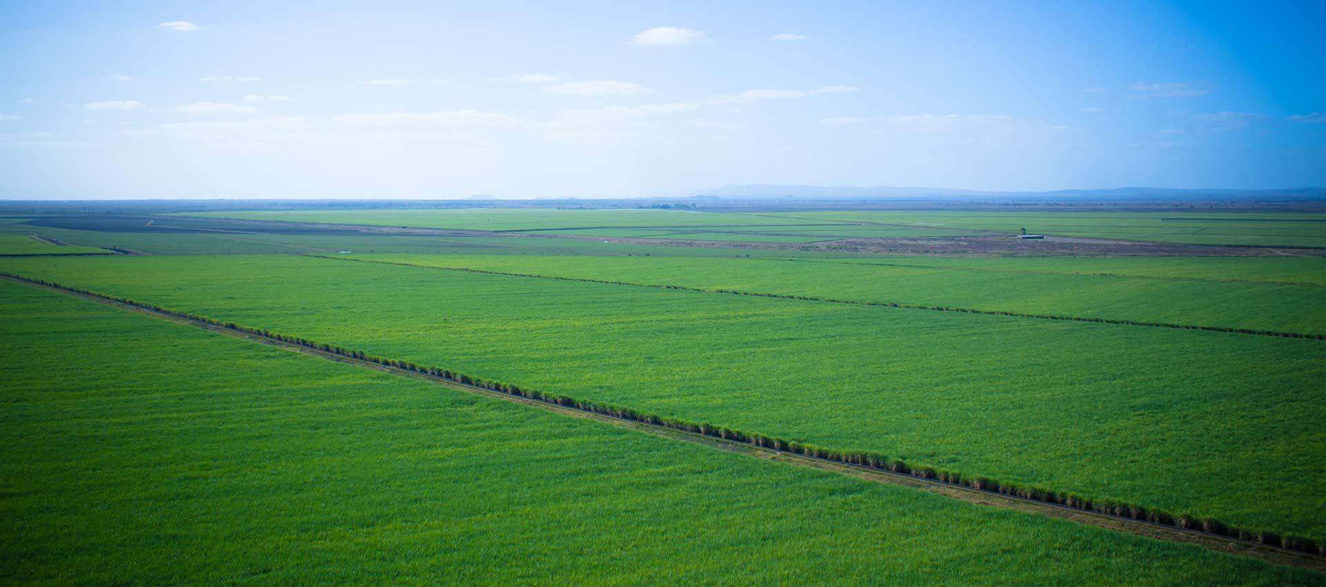 Green Fuel Sugarcane Estates Zimbabwe